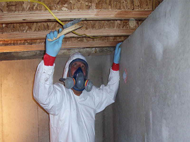 Professional Mold Remediation Services At Affordable Prices
