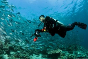 Diving In Sipadan – One Of The Best Diving Destinations In The World