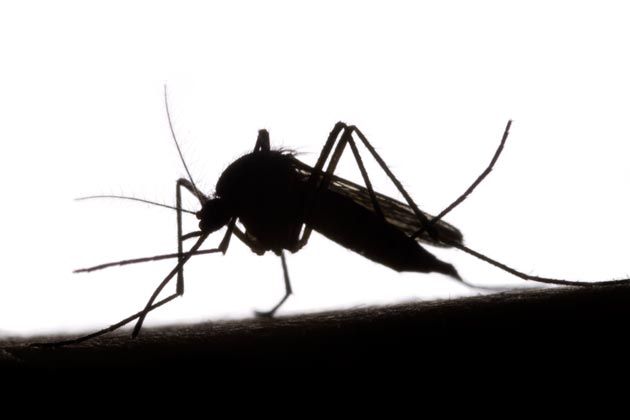 Effective Chemical Free Mosquito Repellents