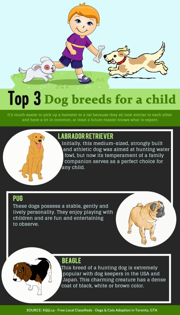 Top-3-dog-breeds-for-child