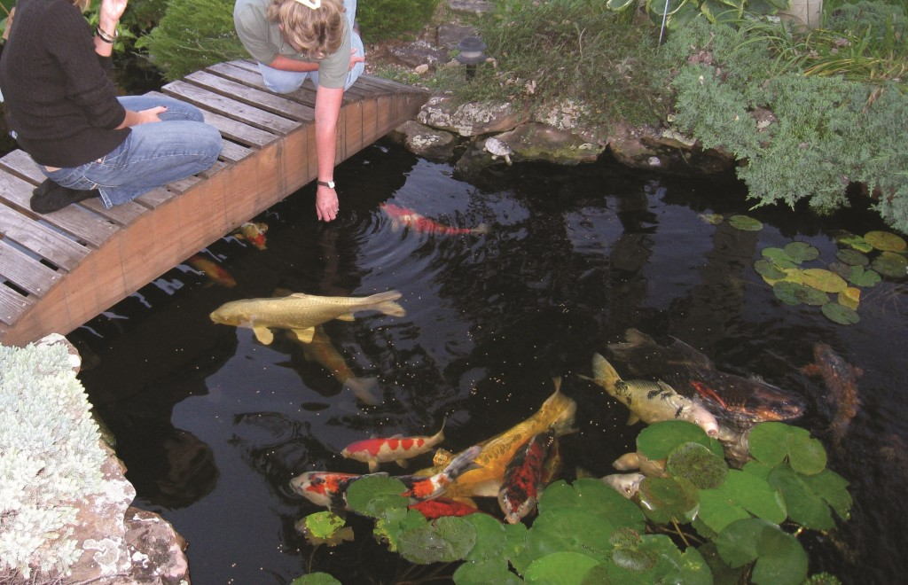 Garden Pond Provisions - Easy Instructions For Purchasing Garden Pond Provisions