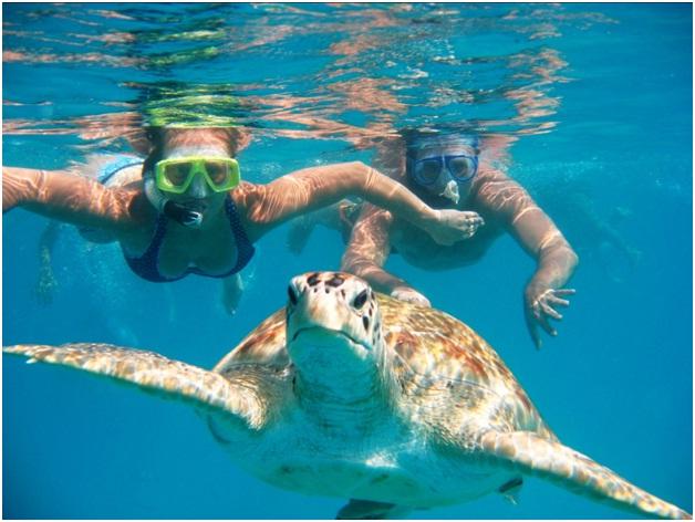 Swim With Sea Turtles On A Barbados Vacation