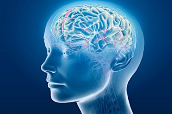 Purchase Brain Boosters For Your Own Personal Research