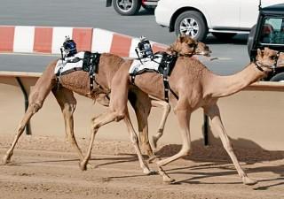 Wackiest Things You Can Do In Abu Dhabi