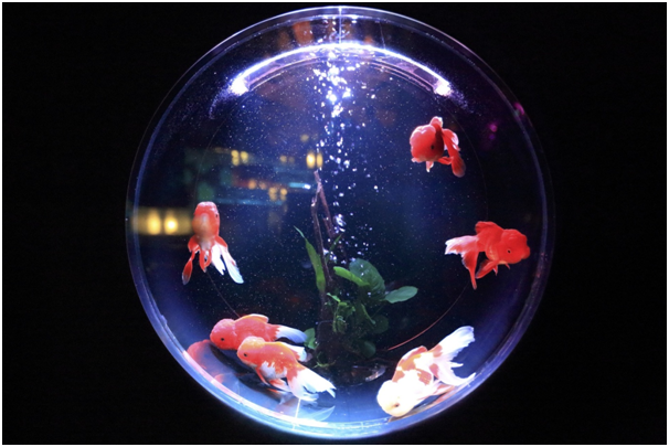Learn The Art Of Keeping Your Fish Alive