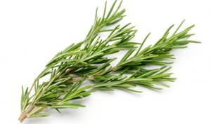Rosemary Oil: Did You Know It Can Deal With Sexually Transmitted Disease?