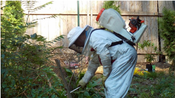 Get Rid Of Pest By Hiring Pest Controllers Watford Service