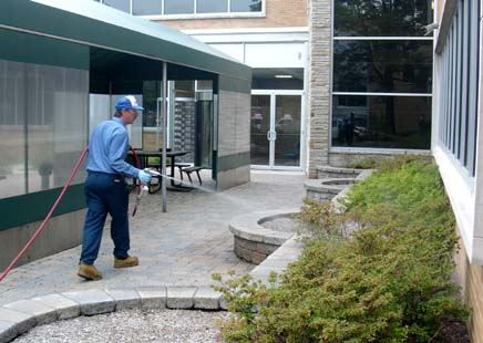 Importance Of Hiring Insect Management Services