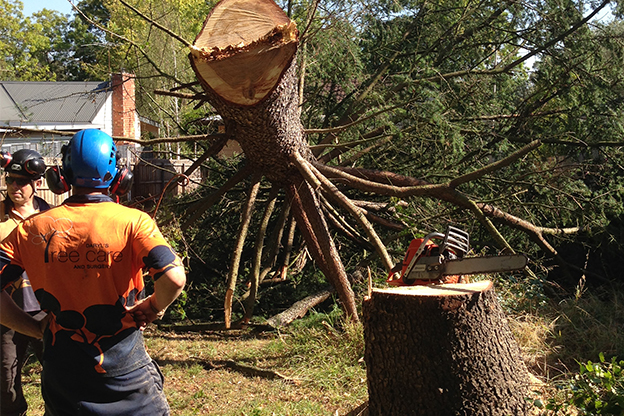 Why Have Your Tree Removal Carried Out By An Expert