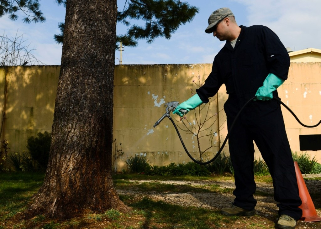 How To Choose The Best Pest Control Maidenhead