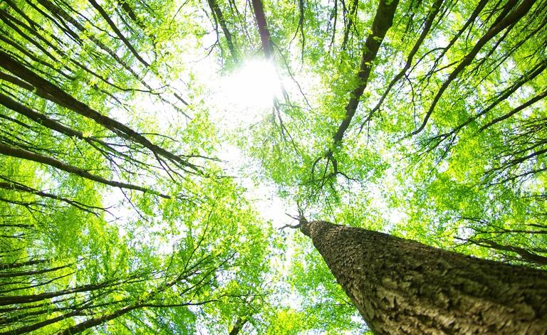 Getting The High Quality Tree Services—Great Advantages To Ponder