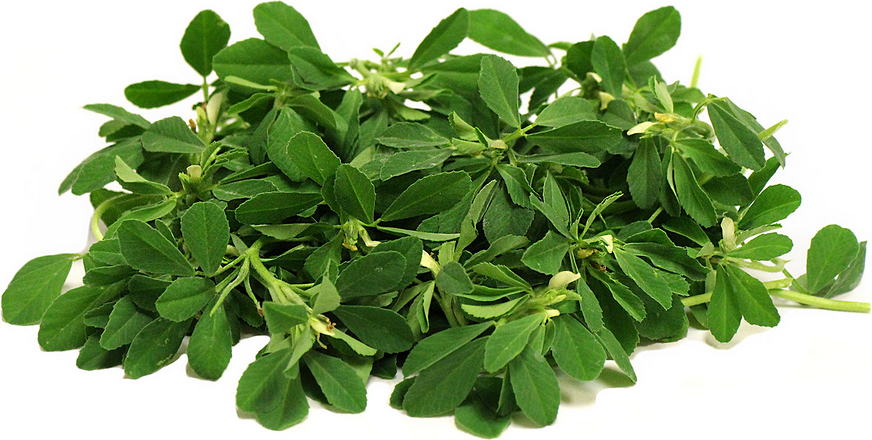 Fenugreek and Its Miracle Benefits Of Increasing The Testosterone Level