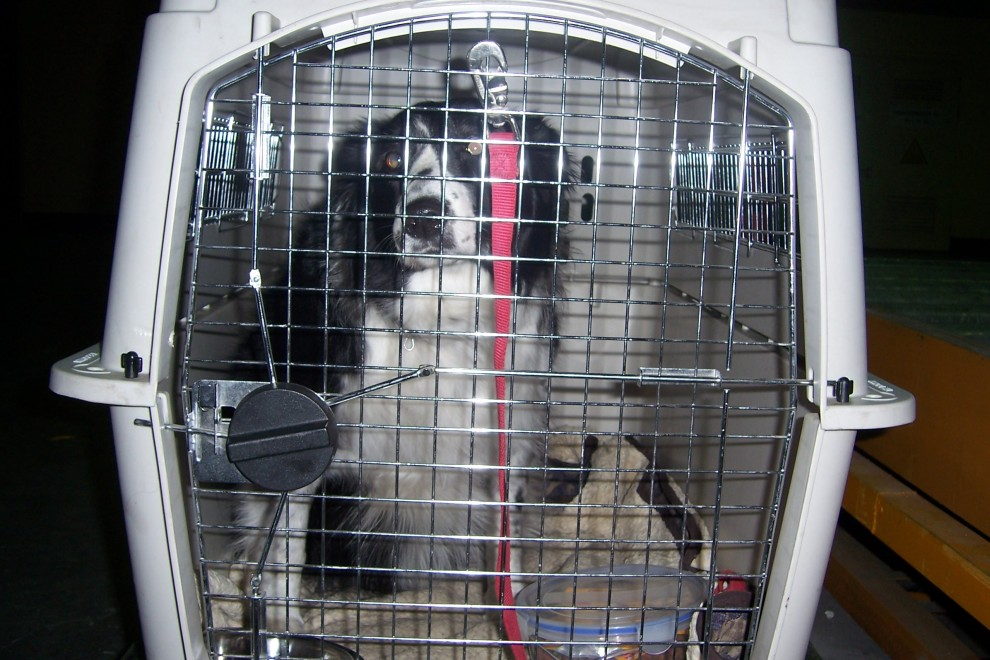 Pet Shipping Services