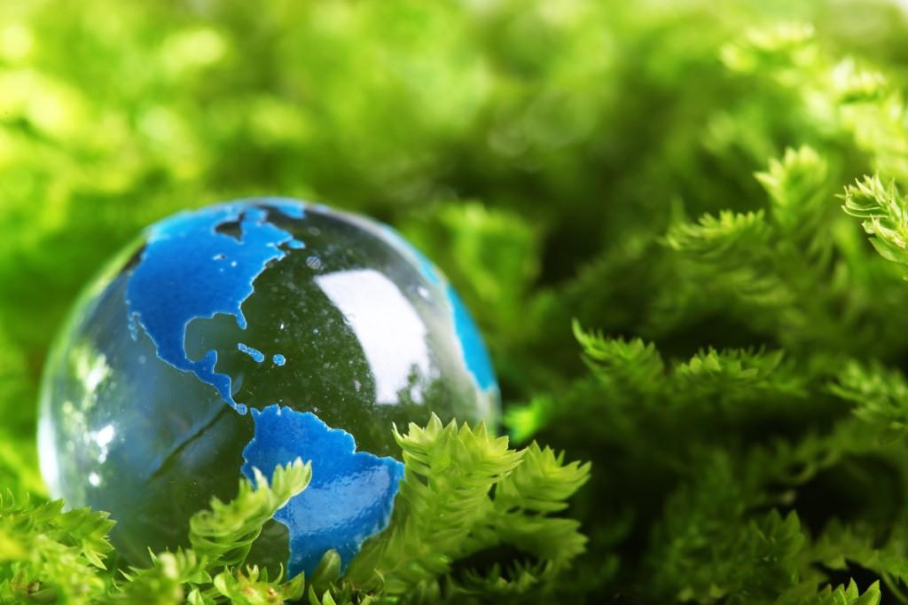 How Environmentally Sustainable Profitable To Dairy Farming