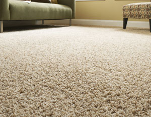 Tips to Cleaning Up the Vomit on Your Carpet