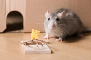 Banish That Mouse From Your House!