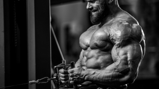 With Steroids Muscle Building Is A Cakewalk