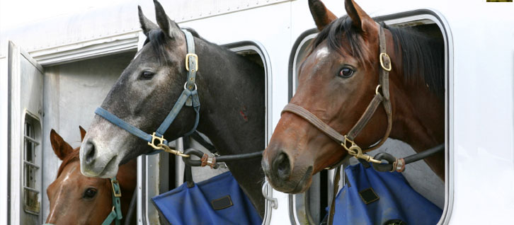 Things To Consider When Getting Horse Trailer Insurance