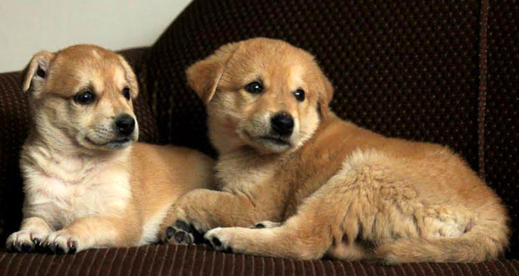 Dog Boarding In Faridabad, The Best Option For Your Pets