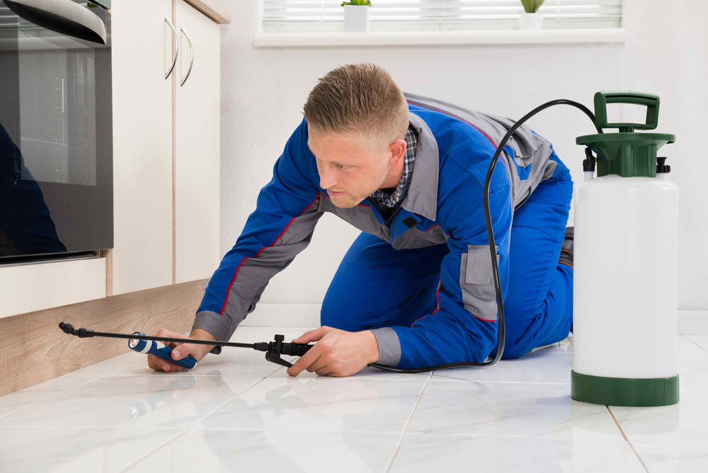 What Should Be Expected From A Competent Pest Controller?