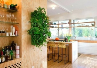BEST PRACTICES FOR DECORATING INDOORS WITH PLANTS
