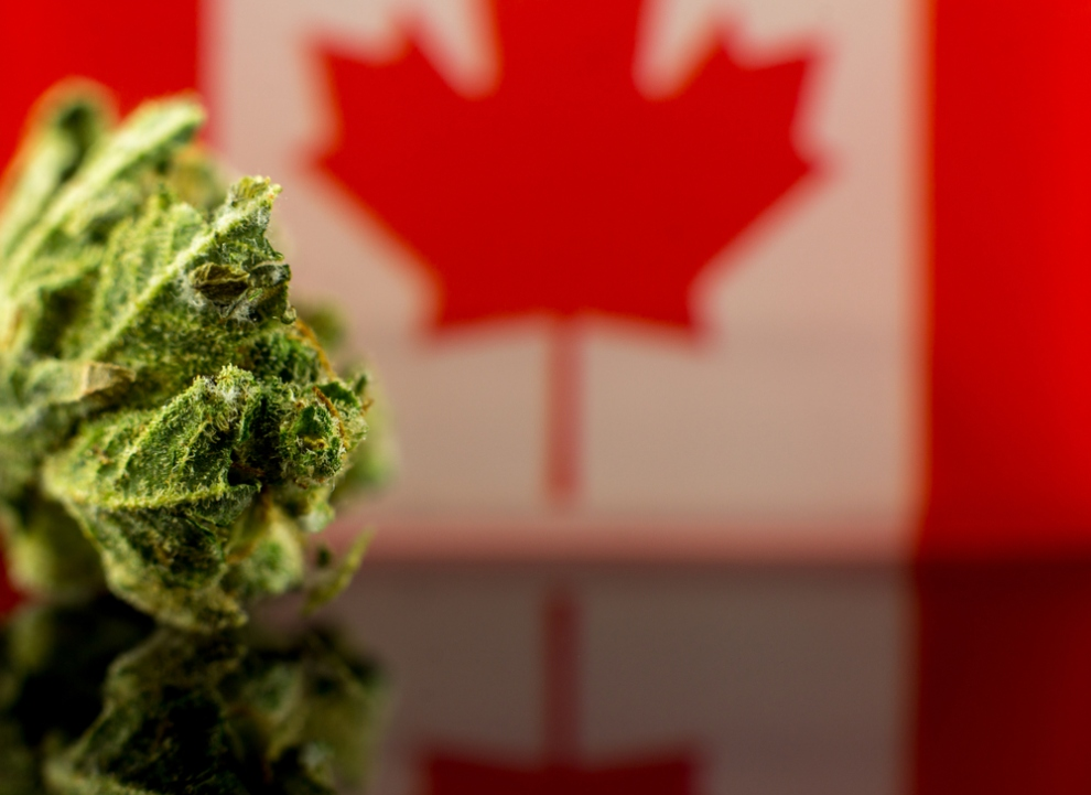 Is Marijuana Legal in Canada? Everything You Need to Know