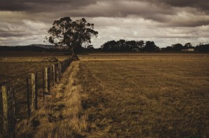 4 Ways To Keep Your Farm Efficient and Cost Effective