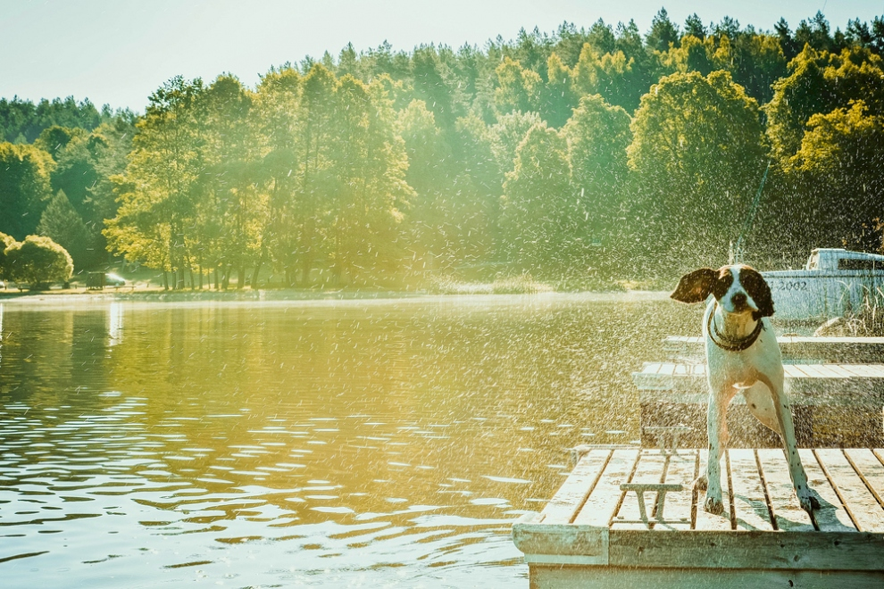 Keeping Your Dog Cool In Heatwaves