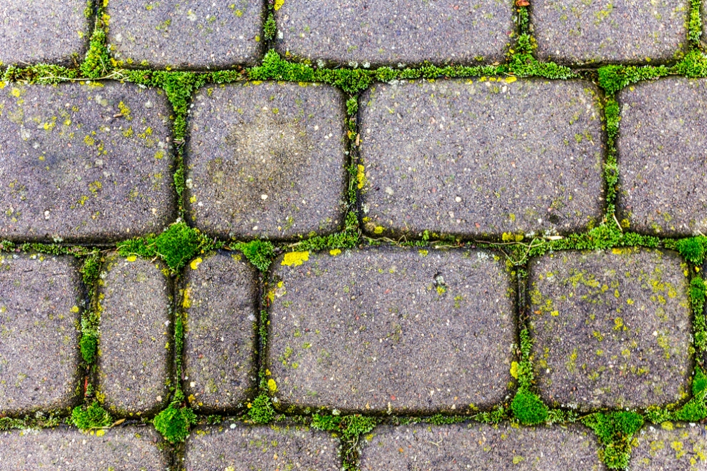 Paving Stones Installation: What to Plan?